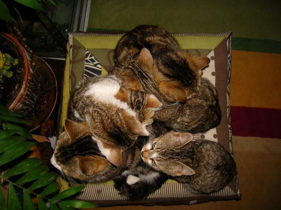 Le tas de chats