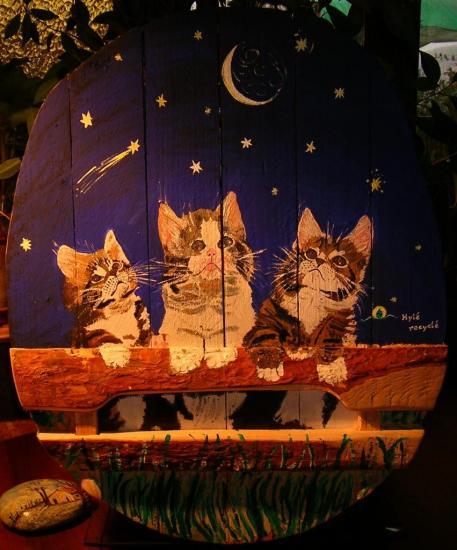 chats étoilés
