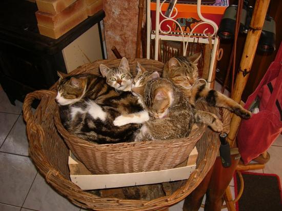 amas de chats: tiko, cléo,syrius, fouyou, bello