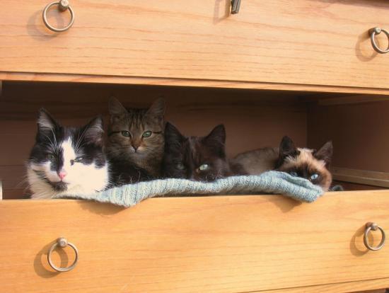 Le tiroir à chat