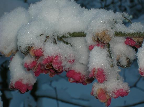 Bois carré, fleur d\'hiver.