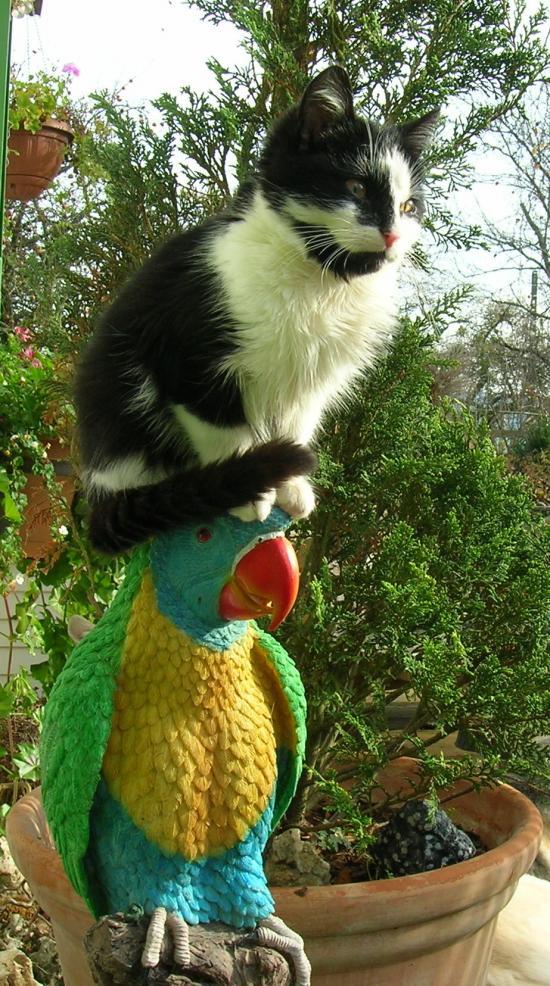 Le totem du chat