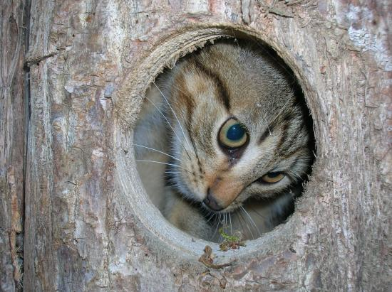 Naturellement...la chatte fait la chouette