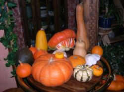 courges-028.jpg
