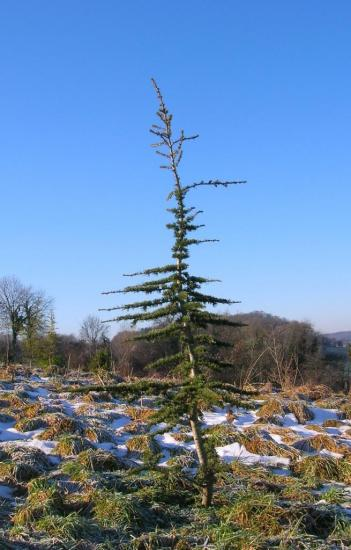 de-jeunes-arbres-021.jpg