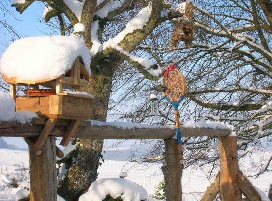 oiseaux-du-jardin-061.jpg